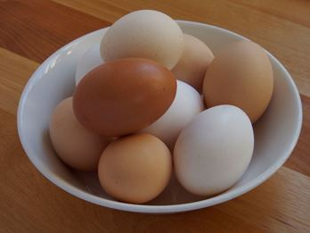 Picture of Burroughs Pastured Eggs - Medium